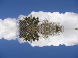 Tree-1 by OssieLovesT