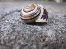 Shell snail by Wolinpiotr