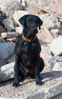 black dog on rubble by terryrunion