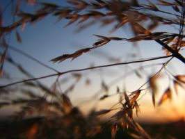 Grasses 2 by okbrightstar-stock