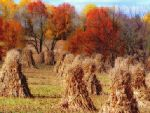 Shades of Autumn 25 by MadGardens
