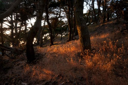 Last Light forest stock by little-spacey