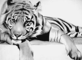 Tiger Relaxing by artistelllie