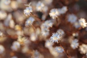 Dead asters 1 by greyrowan