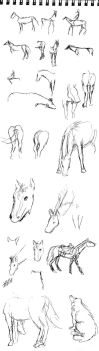 Horse sketches by Valkeus-and-Varya