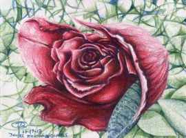 11192013 Rose by DRagsdale
