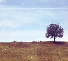 Lonely Tree 10 by JustMe255
