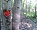 heart in the wood by Geekdemon