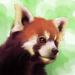 Red Panda by CandyBeeArts