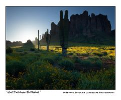 """Lost Dutchman Brittlebush"" by gwrhino"