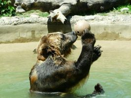 Grizzly Bear 02 by Unseelie-Stock