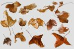 Autumn Leaves_1 by GoblinStock