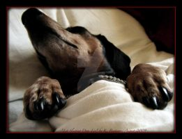 Let Sleeping Dogs Lie by kamisch42