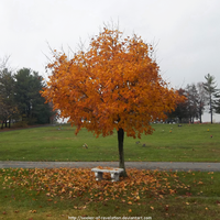 Autumn maple with bench by seeker-of-revelation