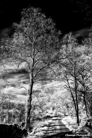 Infrared Trees and Track by Okavanga