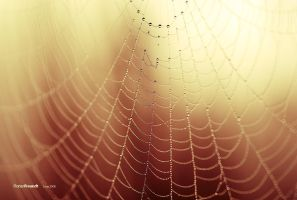 golden web by hermik
