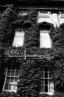 Ivy House. by ElementaryDearWatson