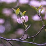 Magnoliales by DinnerSpoiler