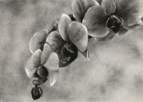 charcoal orchids by Pickleweasels