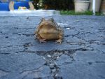 Warty the Toad by Rollerwings
