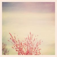Red Tree, Blue Sky by shelbyrenee