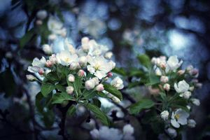apple orchard III by miss-gardener
