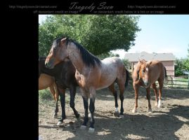 quarter horse stock 16 by tragedyseen