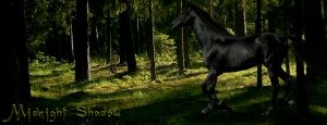 Midnight Shadow by HorseWhisperer101