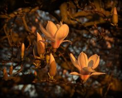 Her Magnificence Magnolia 2 by Isyala