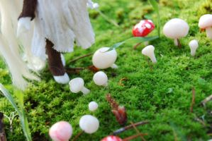 the Fairy Ring by DaisyDayes