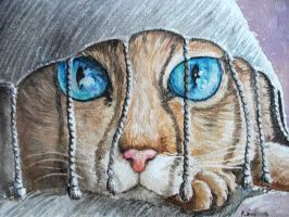 cat 4 by imcy