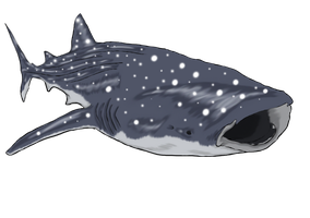 Whale shark by FlyingFox-Bat