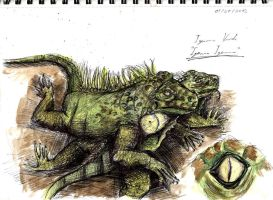 Green Iguana Final Study by Counterdraw