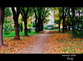 Path in autumn by niwaj