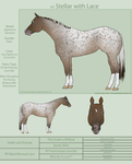 PD Stellar with Lace - Appaloosa by painted-cowgirl