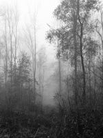 Fog in the forest by Caillean-Photography