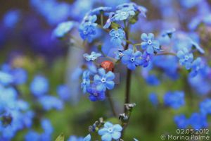 Forget me not 2. by MarinaPalme