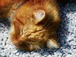 Nap in the sunshine by eReSaW