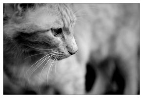 Whiskers by mnoo