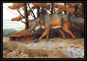 Grey fox fishing by Seaff