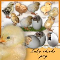 Baby Chicks by roula33