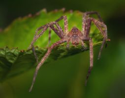 Tired Spider by drhine