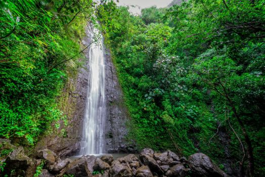 Manoa Falls, Hawaii by Jonathan-Flash