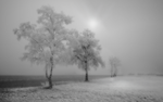 Frozen Tree by tinibook
