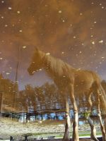 reflection by astridlover
