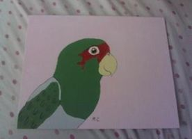 Mitred Conure Painting by MadalynC
