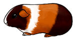 Adoptable Guinea Pig by Svataben