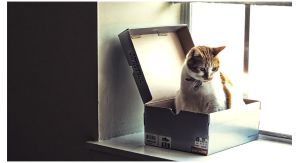 Cat in a box by sees2moons