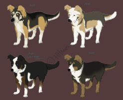 GSD adoptables by HHAdopts