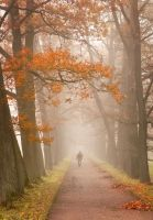 Misty Autumn... _1_ by my-shots